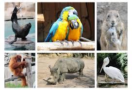 dierenpark